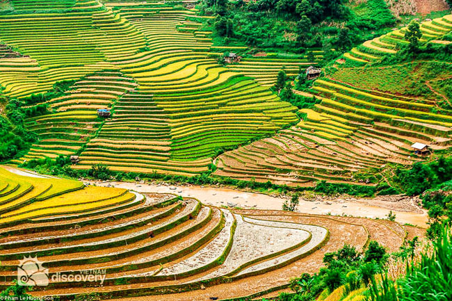 Beautiful terrace fields in Sapa - Vietnam Northwest Tour 12