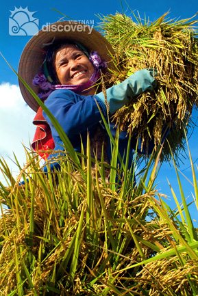 Smile of a harvest season - Hanoi harvesting day tour