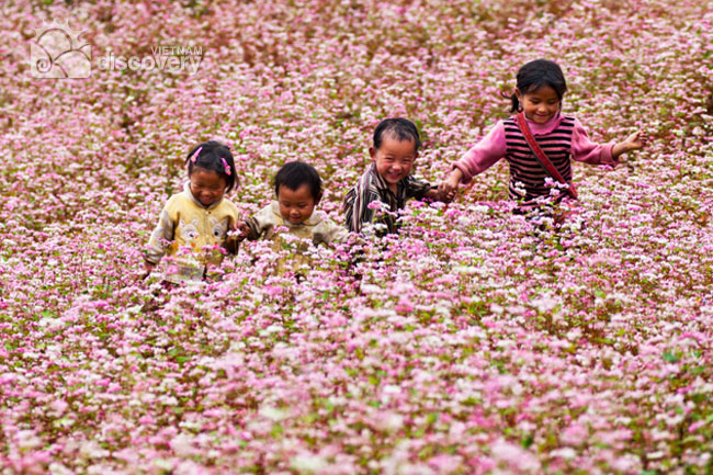 Tam Giac Mach Flower in Ha Giang - Vietnam Northern Tour