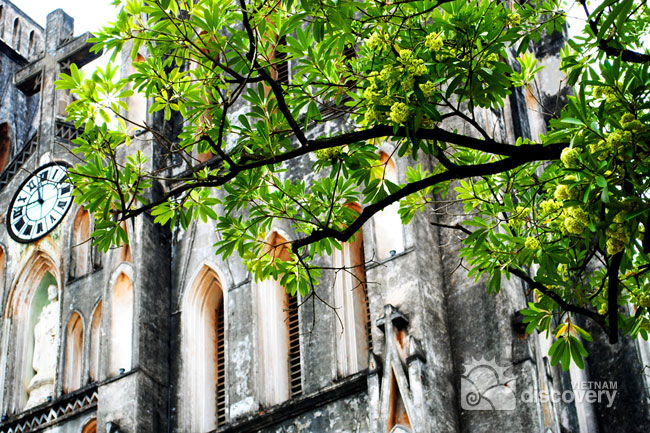 Hoa Sua in front of Hanoi Cathedral - Travel to Hanoi